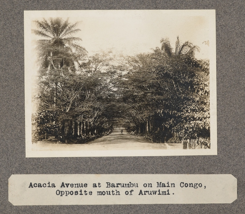 Acacia avenue at Barumba on main Congo. Opposite mouth of the Aruwimi