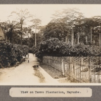 View of Temvo Plantation, Mayumbe.
