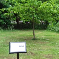 2007 Leyton and Leytonstone Bicentenary Oak Tree.jpg