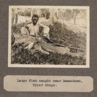 Large fish caught near Basankusu, upper Congo